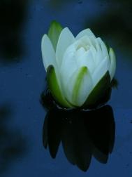 Debra's pond